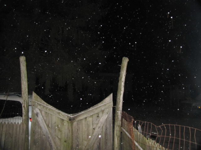 a snowy night looking over the back gate