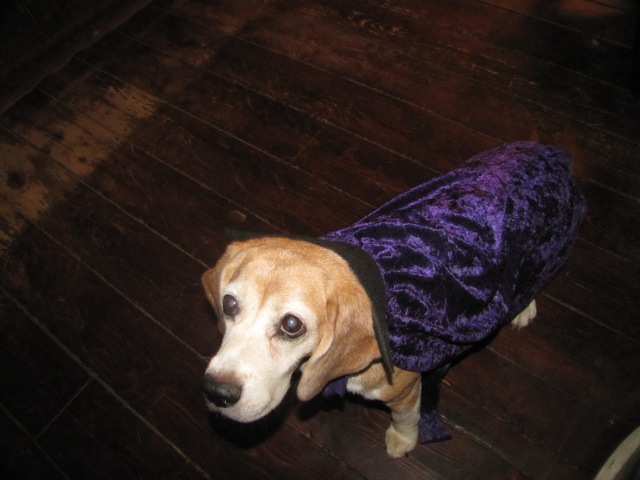 Here's our girl looking spooky (Not) - well, at least she is looking purple.